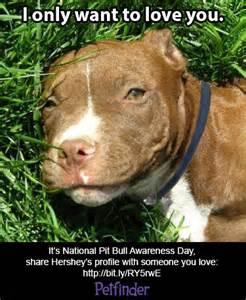 Pitbull Puppy Meme