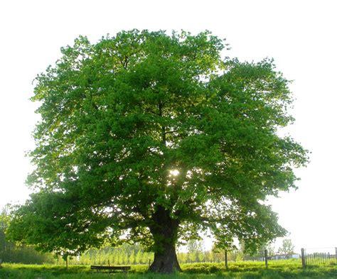Calorische waarde hout