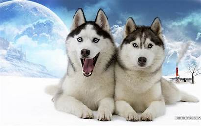 Animal Wallpapers Desktop Funny Wolf Animals Themes