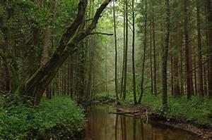 Forestry In Estonia
