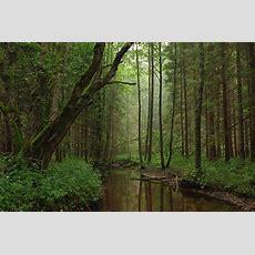 Forestry In Estonia Wikipedia
