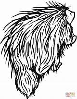 Coloring Porcupine Drawing Porcupines Clipart North Printable Categories Viper Getdrawings Head Supercoloring sketch template