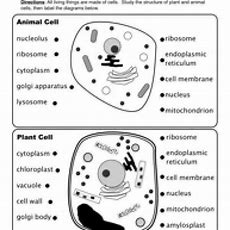Plant Cell Diagram Worksheet Homeschooldressagecom