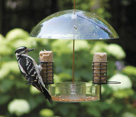 birds choice supper dome bird feeder for feeding seed