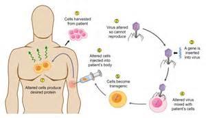 Gene Therapy - BioNinja Genes and Gene Therapy