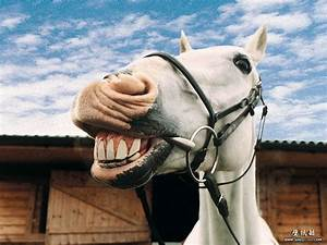 Goofy Horse pictures - Smiling Horse ? 17 - Wallcoo.net
