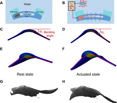 fast moving soft electronic fish science advances