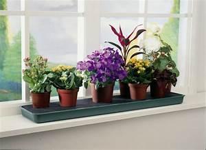Fenster Licht Deko : fensterbank deko mit pflanzen die einen kleinen garten erschaffen ~ Markanthonyermac.com Haus und Dekorationen