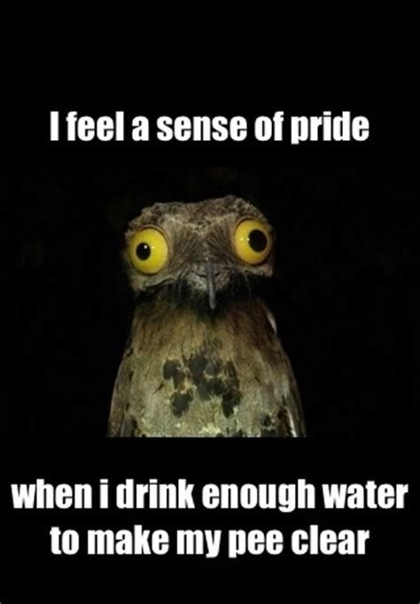weird stuff   potoo meme guy