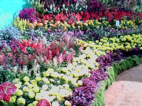 show the picture of flowers bangalore lalbagh flower show vishwapriya