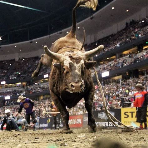 bushwacker bushwacker pbr bucking bull