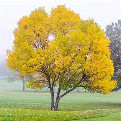 Tree Fall Colorado Trees Springs Lander Square