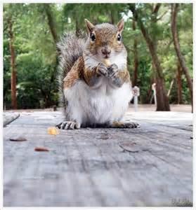Squirrel Cute Animals