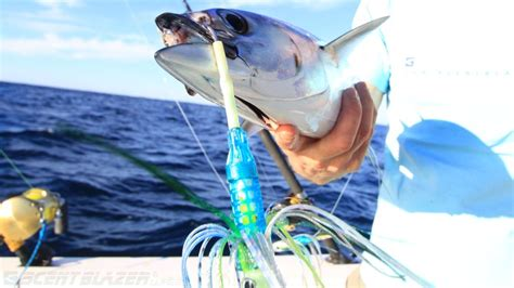 fishing  lure game fish trolling spread