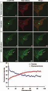 Upon Photoactivation In M Nrp1
