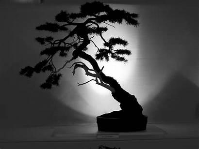 Tree Outline Bonsai Silhouette Shadow Trees Japanese