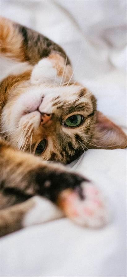 Cat Cute Iphone Backgrounds Shirt