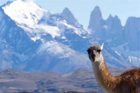 Patagonia Tours Trekking And Hiking In Chile With Pura