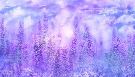 violet sage plant  photo  pixabay