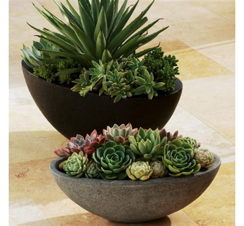 succulent containers planters along with the succulents pictured are available today at jackalope pottery please