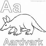 Coloring Aardvark Animal Anteater Unique Coloringfolder Animals sketch template