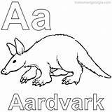Coloring Aardvark Animal Anteater Unique Coloringfolder Animals sketch template