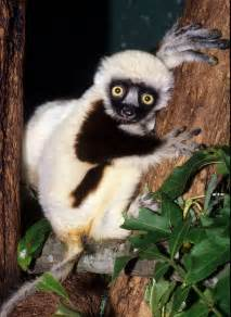 Jovian the Lemur From Zoboomafoo