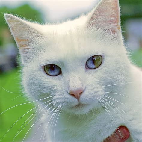 different cats 13 unusually beautiful animals with different colored