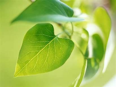 Leaf Leaves Nature Wallpapers Impressive Plants Leave