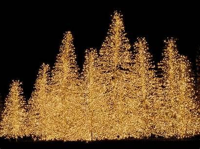 Christmas Tree Animated Gifs Trees Holidays Lights