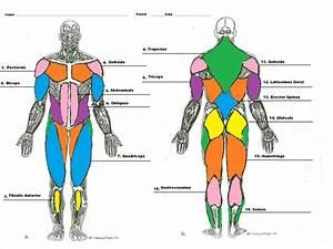 Muscle Man Diagram