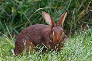 Kaninchenkäfig Für 2 Kaninchen : was d rfen kaninchen nicht fressen ~ Frokenaadalensverden.com Haus und Dekorationen