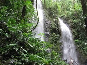 Rainforest: Costa Rica Rainforest