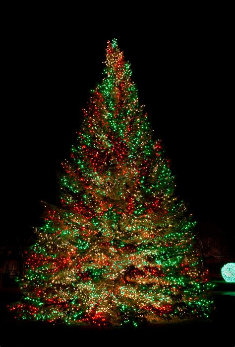 light up outdoor trees christmas primo lights announces soaring demand for led christmas