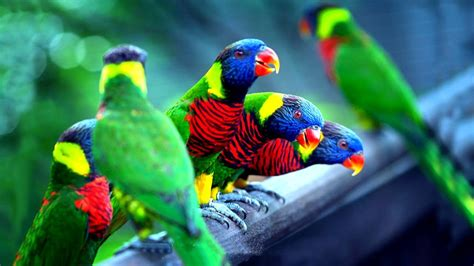 most colorful birds চমৎক র ১০ট প খ top 10 most colorful birds part 1