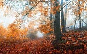 mist, , sunrise, , fall, , path, , trees, , nature, , landscape