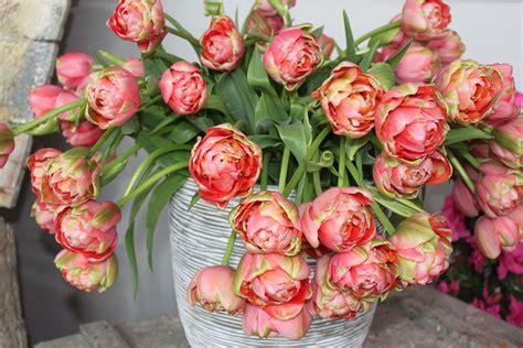 tulpen uit amsterdam ze zijn weer te koop vijftigenmeer