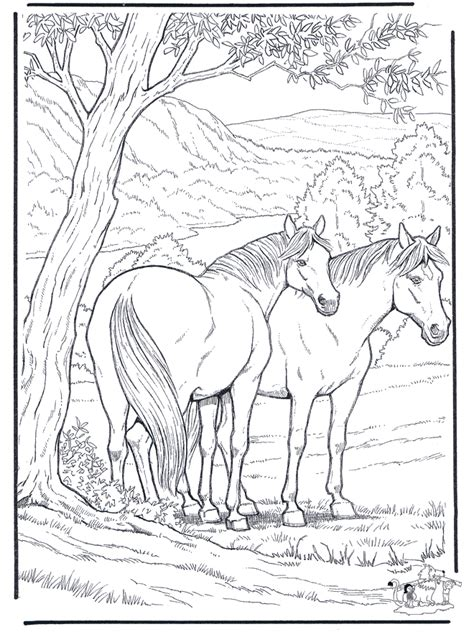coloring pages horse horses