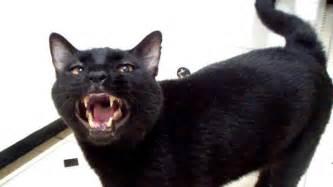 sylvester the talking cat talking kitty cat metroid