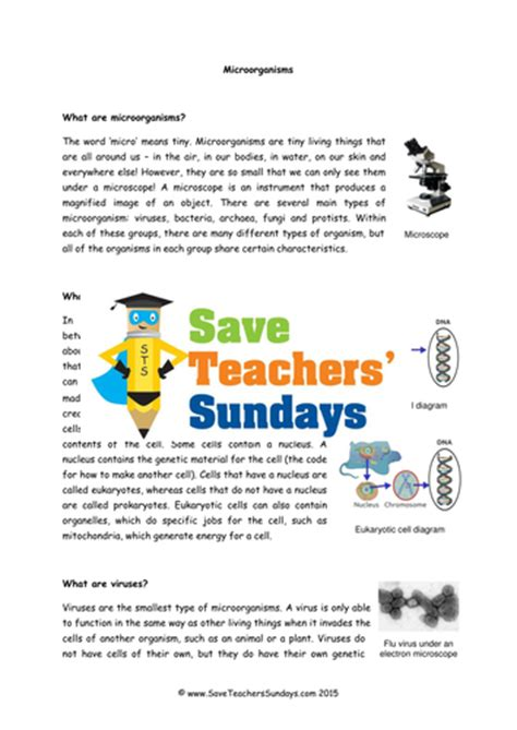 bacteria and viruses ks2 lesson plan information text and worksheet by saveteacherssundays