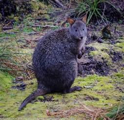 Franklin Gordon Wild Rivers National Park Tasmania