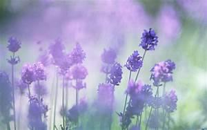 19 Hình ảnh hoa màu tím đẹp làm hình nền đẹp