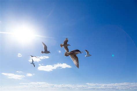 空 を 飛ぶ 夢