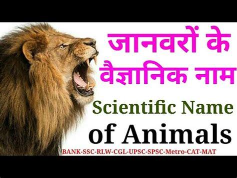 animal  scientific