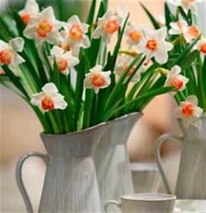 Bouquet De Printemps : fleurs printemps bouquet ~ Melissatoandfro.com Idées de Décoration