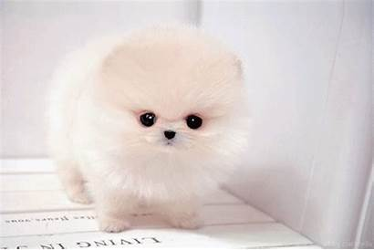 Dogs Puppies Dog Adorable Fluffy Sweet Animals