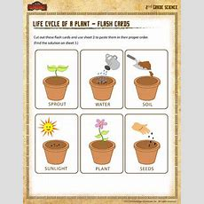 Life Cycle Of A Plant  Flash Cards  2nd Grade Science Worksheet  School Of Dragons