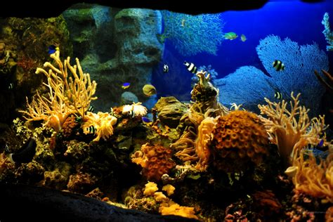 fond ecran hd aquarium studio design gallery best design