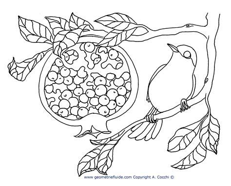 sta lol da colorare capinera e melagrana da colorare uccelli da colorare