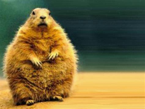 groundhog day wallpapers wallpaper cave